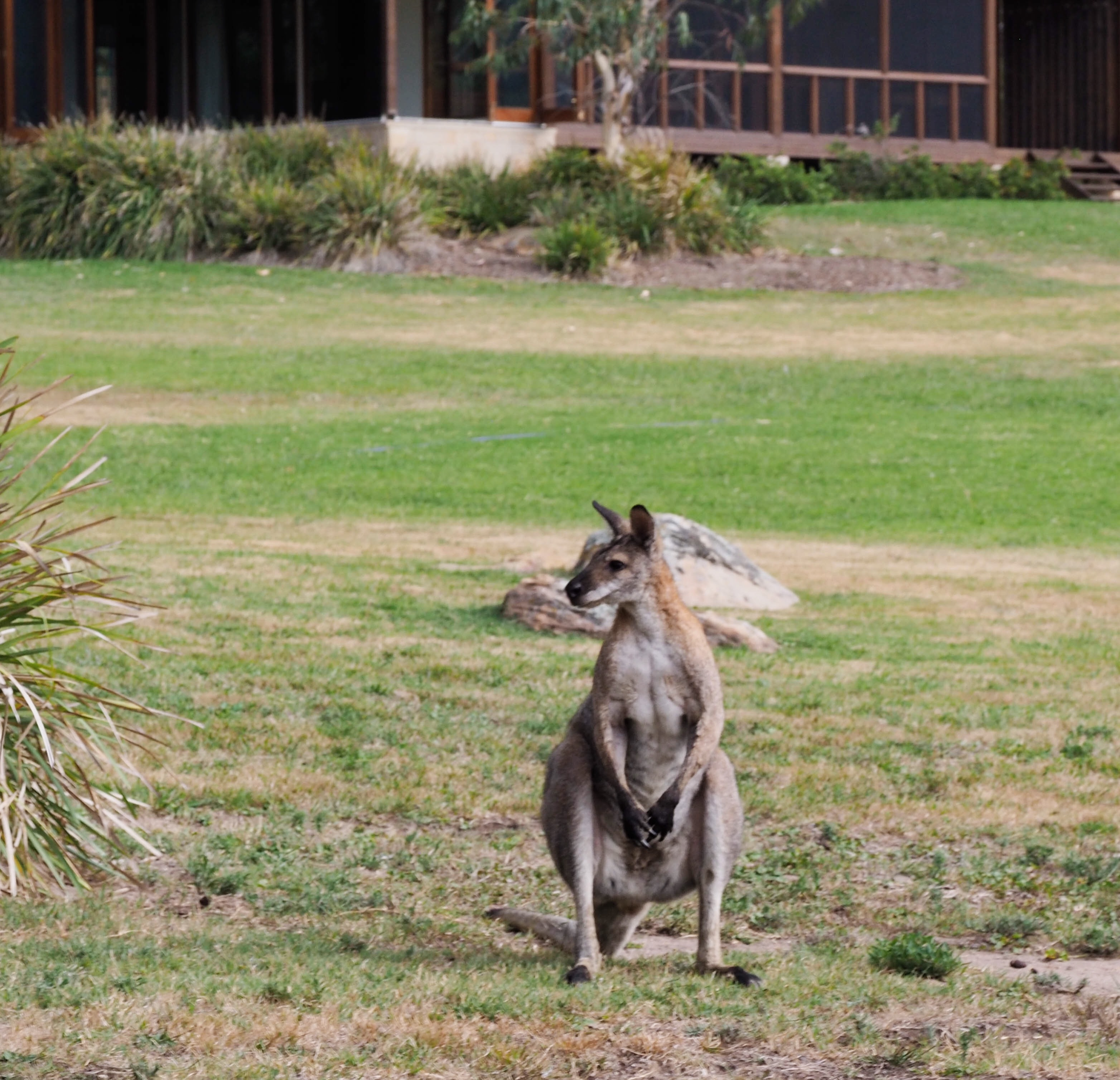 One&Only Wolgan Valley Wallaby
