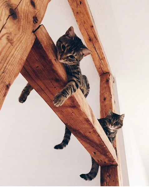 Cute Cats of Instagram